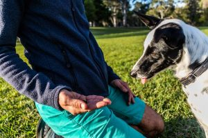 Teach your dog to leave it - with Capri