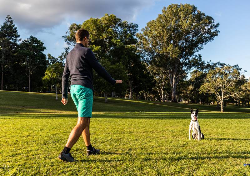 Teach your dog to stay with Capri