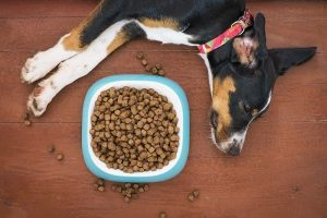 What dogs cannot eat